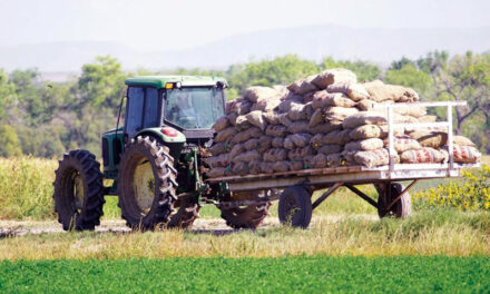 Labor Shortage dampens this year's harvest