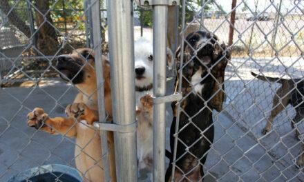 Animal shelter at capacity