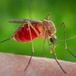 West Nile Virus reported in county